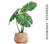3d Digital Render Of Monstera...