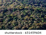 top view of a rain forest with... | Shutterstock . vector #651459604