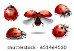 set of red ladybug isolated on... | Shutterstock . vector #651464530