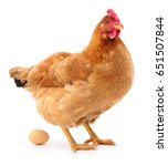 Brown Hen With Egg Isolated On...