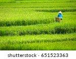 Women Working In Rice Fields I...
