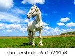 Stock photo white horse portrait in summer nature landscape 651524458