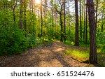 Постер Закат лес деревья солнце