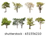 isolated tree on white... | Shutterstock . vector #651556210