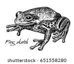 Sketch Of Frog. Toad  Frog ...