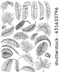 palm leaves set. exotic leaf... | Shutterstock .eps vector #651633796