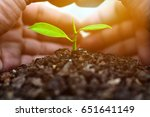 hands protect growing plants. ... | Shutterstock . vector #651641149