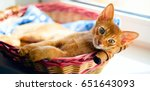 Stock photo cat in the bed 651643093