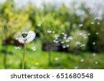 dandelion on the wind.... | Shutterstock . vector #651680548
