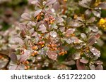 Spring Bushes With Leaves On...