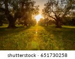 sunset in the tuscan olive... | Shutterstock . vector #651730258