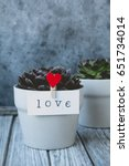 """Small photo of Pot with a flower, on the clothes-pin is affixed the inscription """"love"""""""