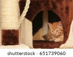 Young Kitten In The Cave Of A...
