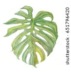 monstera leaf. watercolor... | Shutterstock . vector #651796420