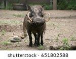 warthog portrait | Shutterstock . vector #651802588