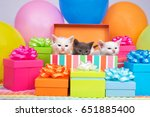 Stock photo two small white kittens and one gray kitten peaking out of a birthday present box surrounded by 651885400