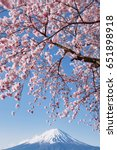 Fuji Mountain And Pink Sakura...
