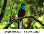 male of resplendent quetzal ...   Shutterstock . vector #651969880