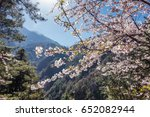 beautiful apricot blooming in... | Shutterstock . vector #652082944