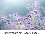 field of purple flowers.