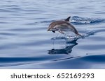 a jumping wild and free striped ... | Shutterstock . vector #652169293