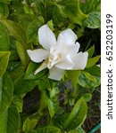 flora | Shutterstock . vector #652203199