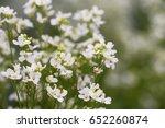 horseradish flowers composition ... | Shutterstock . vector #652260874