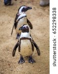 african penguins in the tbilisi ... | Shutterstock . vector #652298338