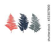polypodiophyta. fern. set of... | Shutterstock . vector #652307800
