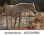 horse outlined in morning light