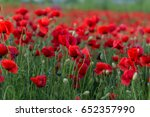 flowers red poppies blossom on... | Shutterstock . vector #652357990