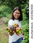 Small photo of Female agriculturist hand showing mangosteens