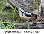 great spotted woodpecker drinks ...   Shutterstock . vector #652494700