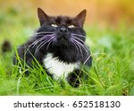 Stock photo cute black cat lying on green grass lawn shallow depth of field portrait a black cat with a white 652518130