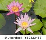 lotus flowers   travel  ... | Shutterstock . vector #652523458