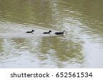 water birds and children | Shutterstock . vector #652561534