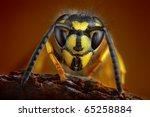 Wasp Detailed Portrait
