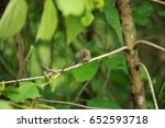 Small photo of Beautiful Male of Crimson Sunbird (Aethopyga siparaja)