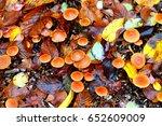 fall scene with copper orange... | Shutterstock . vector #652609009
