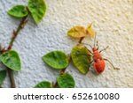 Small photo of Red insect and green grass adhere on white cement wall , blurred effect