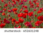 flowers red poppies blossom on... | Shutterstock . vector #652631248