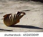 a dead leaf on floor  | Shutterstock . vector #652653049
