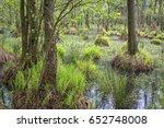 erlenbruch  carr. swamp  or...   Shutterstock . vector #652748008