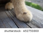help clean ticks from cat.... | Shutterstock . vector #652753303