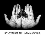 death head butterfly on hands   ... | Shutterstock . vector #652780486