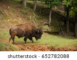 bison also called buffalo... | Shutterstock . vector #652782088