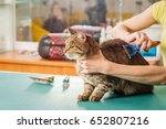 Stock photo grooming cat with tool for shedding hair medicine pet animals health care and people concept 652807216