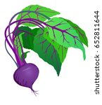 whole beet with greens  fresh... | Shutterstock .eps vector #652811644