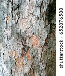 Small photo of Organic background: dry rough bark of a century-old Acer pseudoplatanus (known as a sycamore or a sycamore maple) tree.
