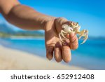 A White Ghost Crab With...
